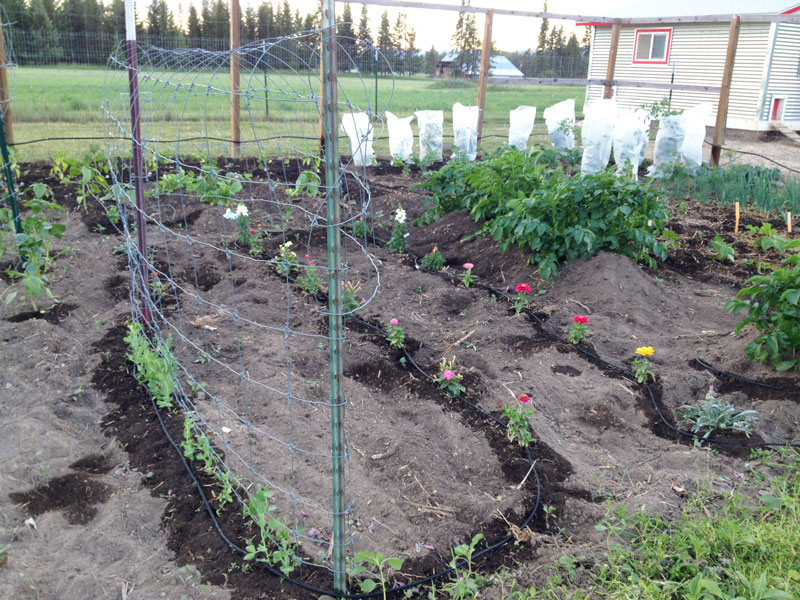 Garden Rows and Beds