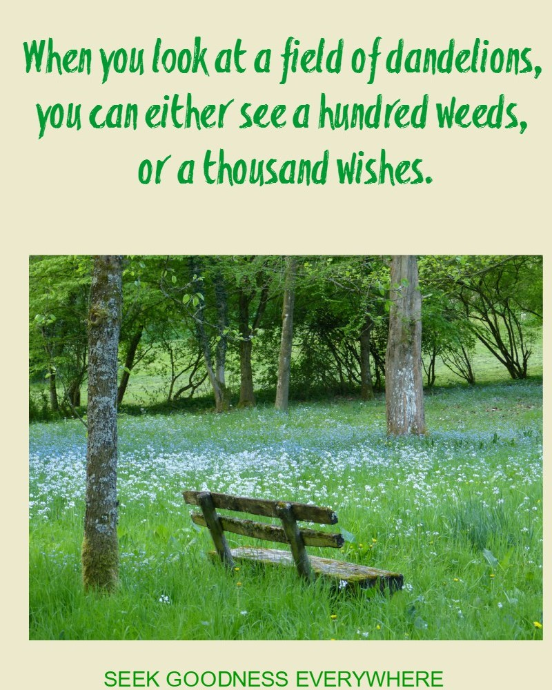 Seek Goodness Everywhere #GratitudeCircle