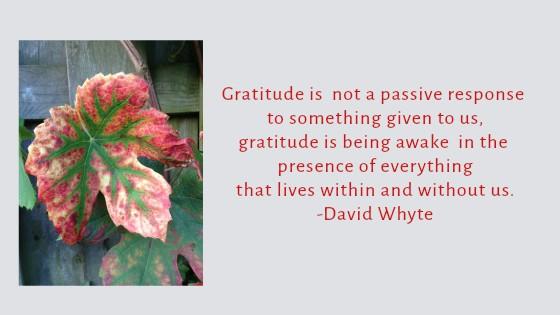 gratitude-is-being-awake