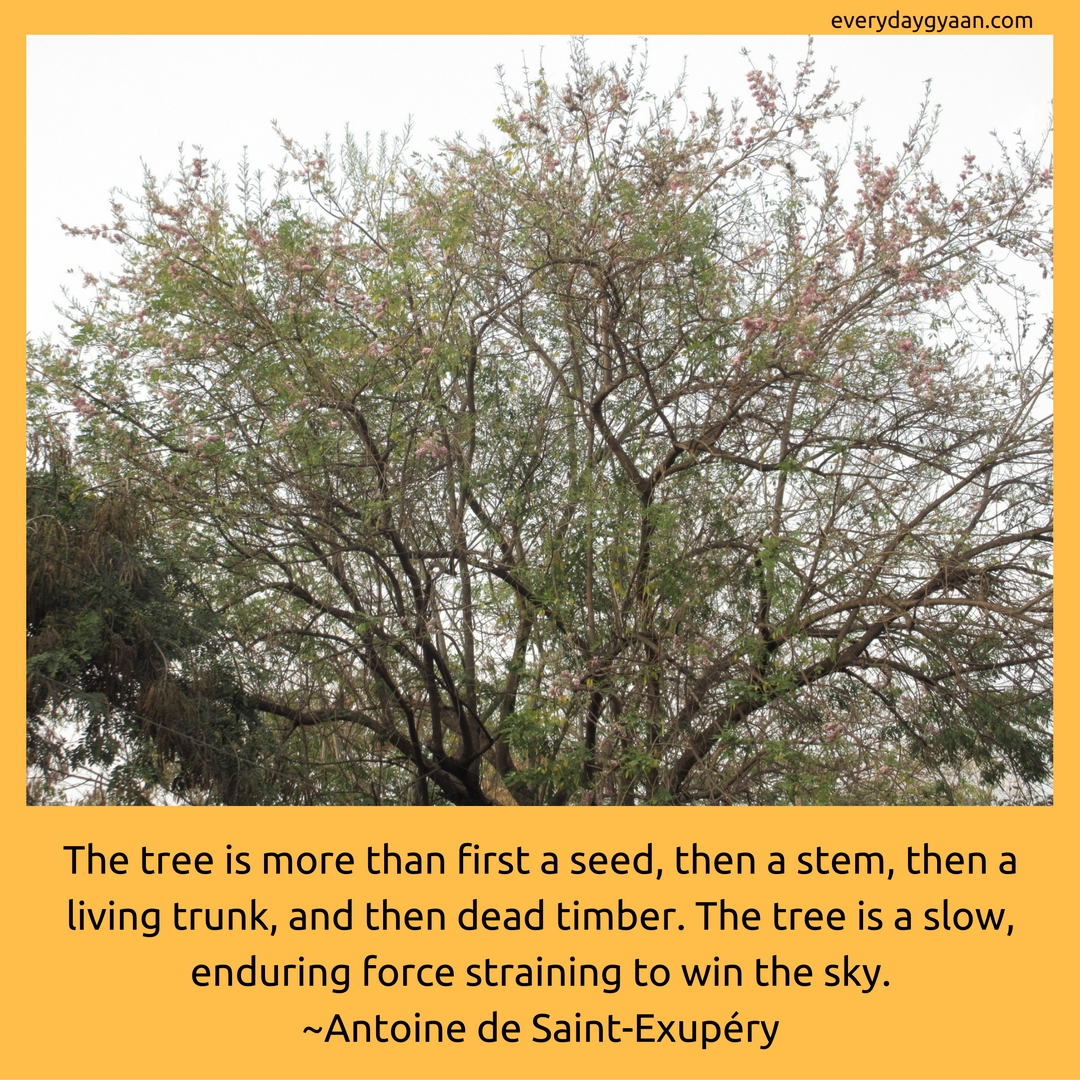 The tree is more than first a seed, then a stem, then a living trunk, and then dead timber. The tree is a slow, enduring force straining to win the sky. -Antoine de Saint-Exupéry