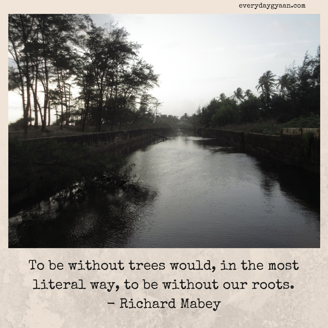 To be without trees would, in the most literal way, to be without our roots.- Richard Mabey