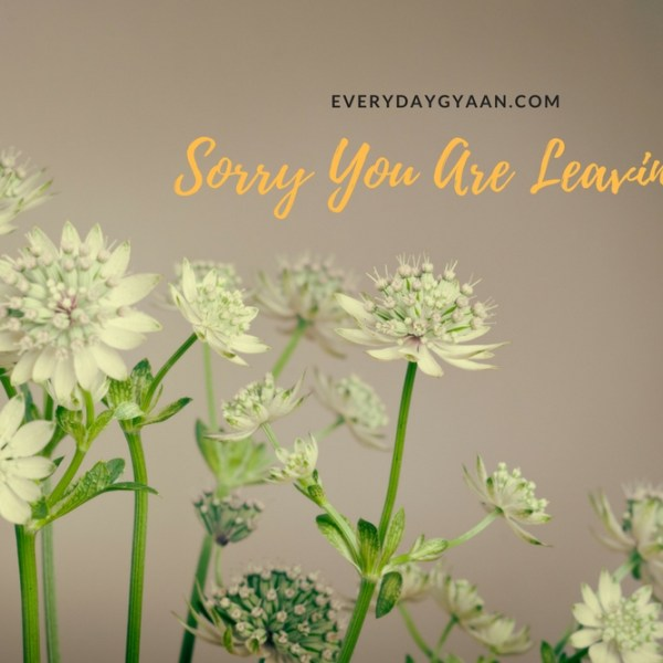 Sorry You Are Leaving #MondayMusings