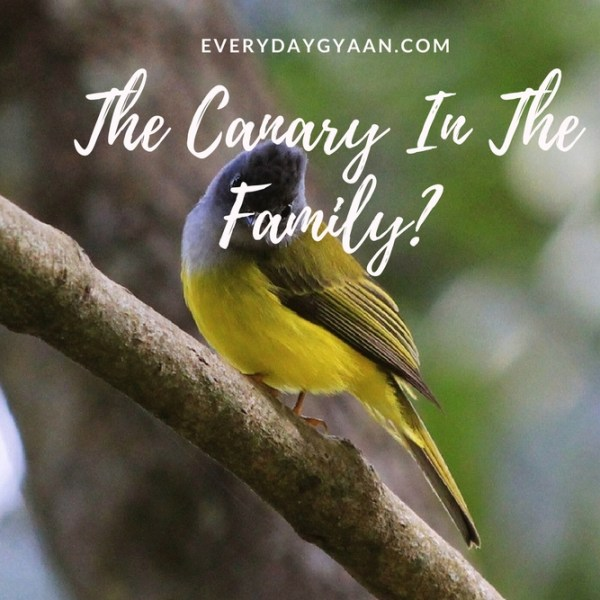 The Canary In The Family? #writebravely #MondayMusings