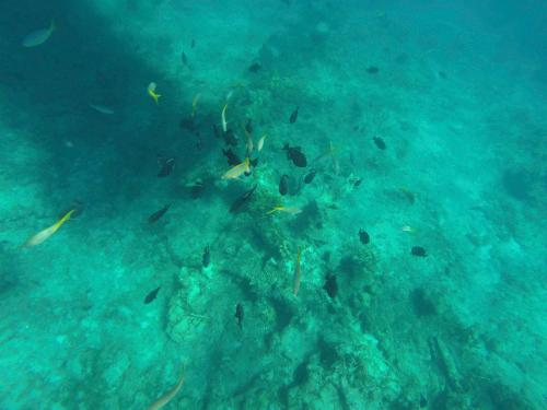 Dive in Turks & Caicos Islands