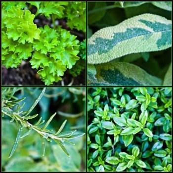 Parsley, Sage, Rosemary & Thyme  http://flic.kr/p/8aCWnr