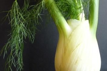 Fennel Kraut w/ Daikon & Napa Cabbage