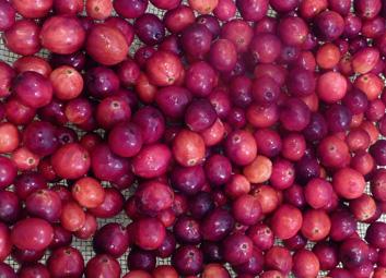 Cranberry Apple Ginger Chutney