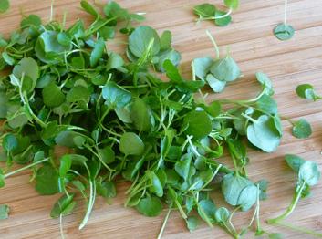Arugula Watercress Fennel Apple Almond Salad with Apple Cider Vinaigrette