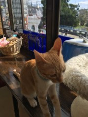 Neko Cafe time #1