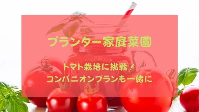 プランターのトマト栽培に挑戦