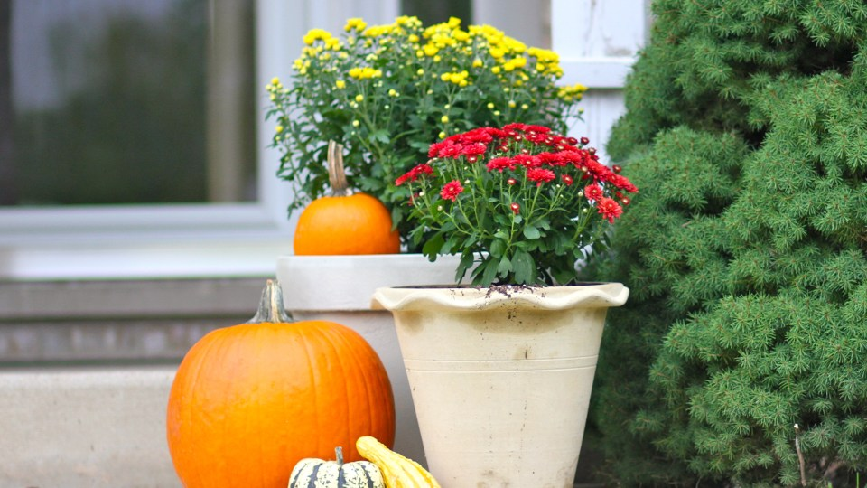 The gifts of fall