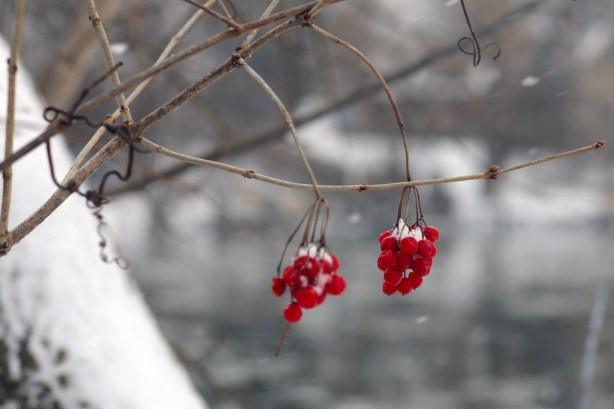 021416berries