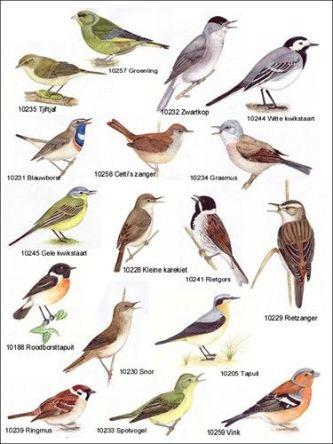 Veel voorkomende vogelsoorten