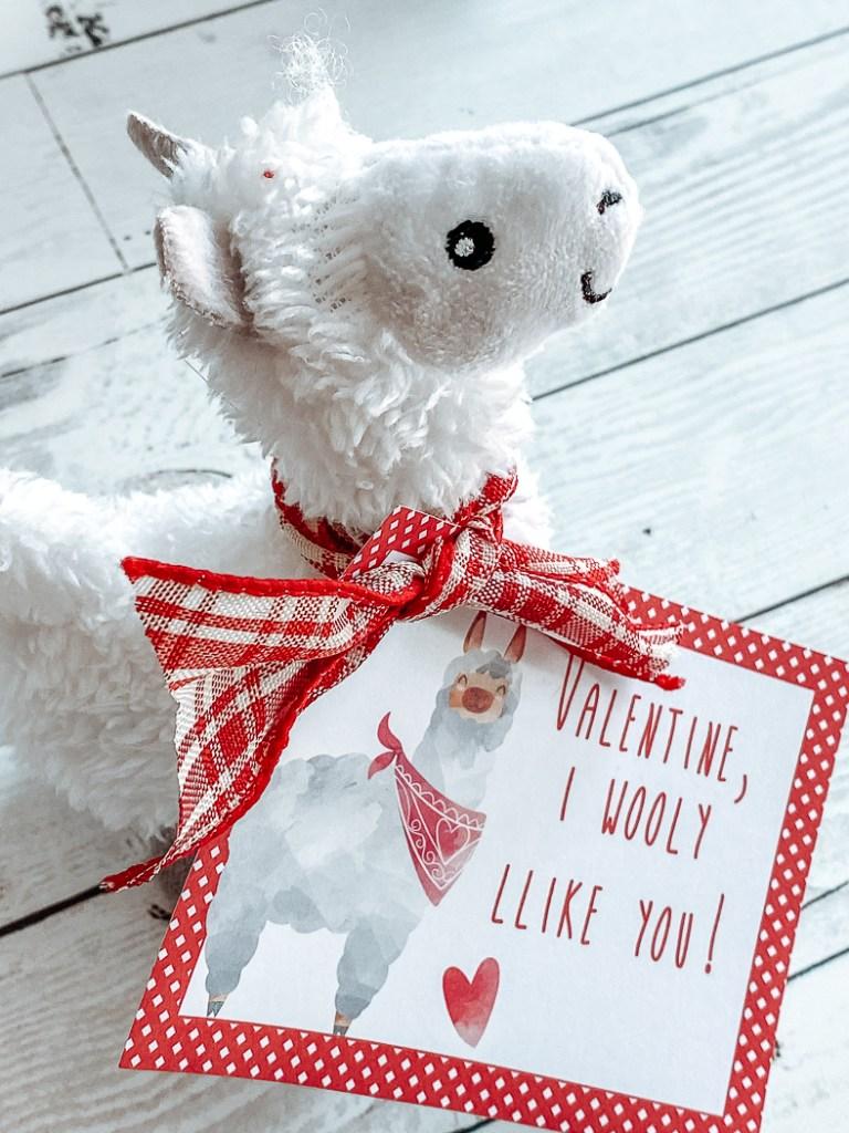 Llama Valentine's Day Card