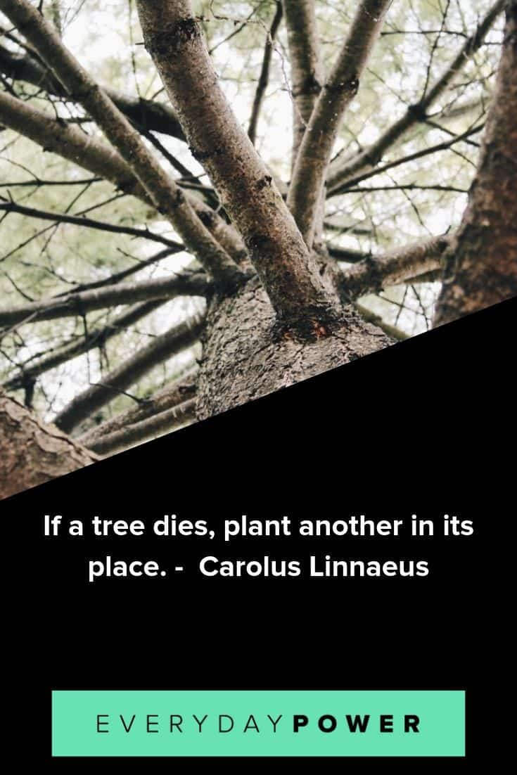 Tree quotes to remind you how our very breath depends on their conservation