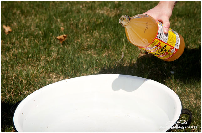 drink to get rid of fleas
