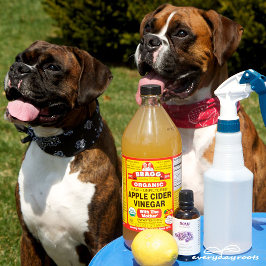 6 Home Remedies for Fleas- keep your dogs bite free without using harsh chemicals.