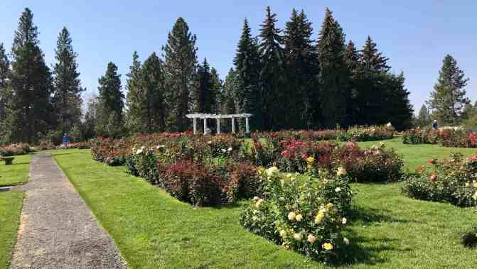 image of rose garden roses