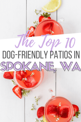 image of dog friendly patios list in spokane, wa