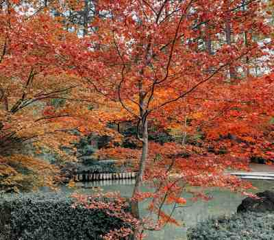 fall colors in spokane