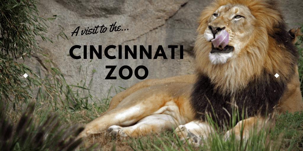 A visit to the Cincinnati Zoo