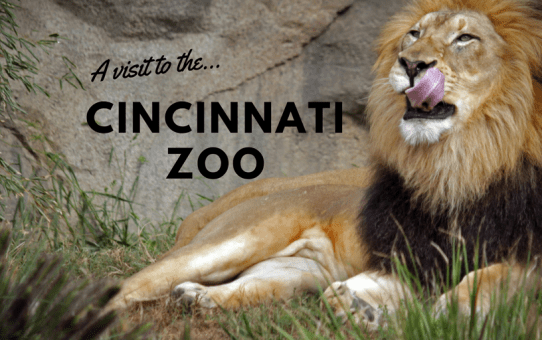 A visit to the Cincinnati Zoo