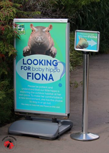 Baby Hippo Fiona sign at the Cincinnati Zoo