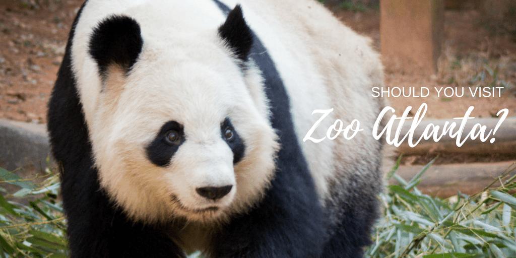 Should you visit the Atlanta Zoo?