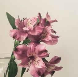 gfancy_purpleflower_hazyday