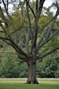 tree-revised