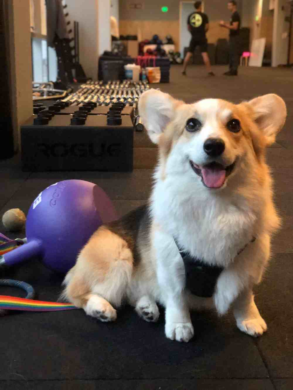 Workout with Corgis at Flagship