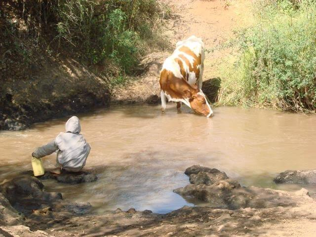 maji means water - a dirty river with a cow and a child both getting water
