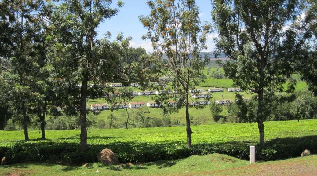 Report from Kenya