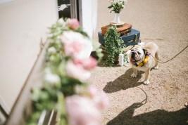 dog posing for wedding pic