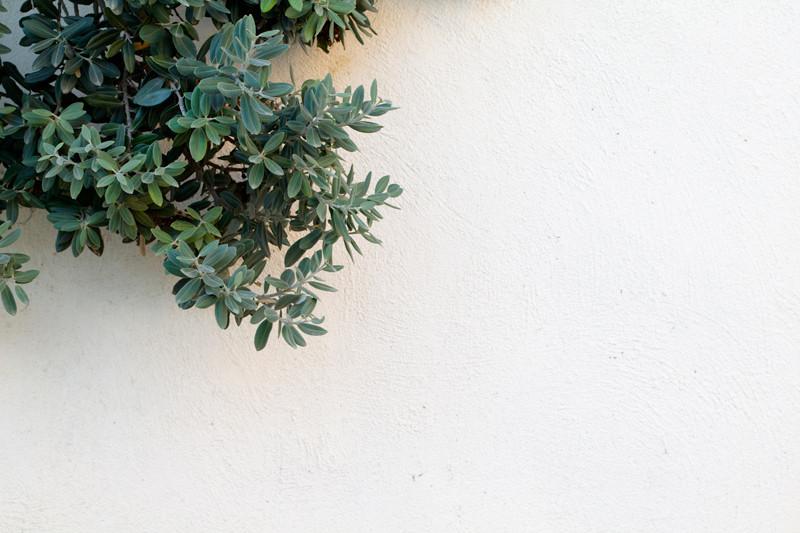 leaf-wall-1