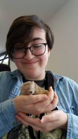 Mr Maddy the Lesser Hedgehog Tenrec