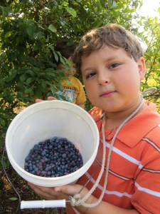 Jonathan'sblueberries