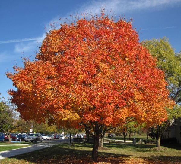 5 popular trees brighten