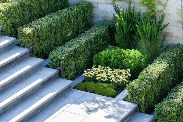 top 7 easy modern landscaping plants