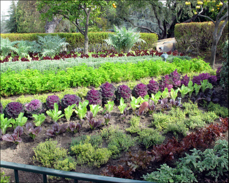 7 Edible Landscape Design Ideas to Make the Most Out of
