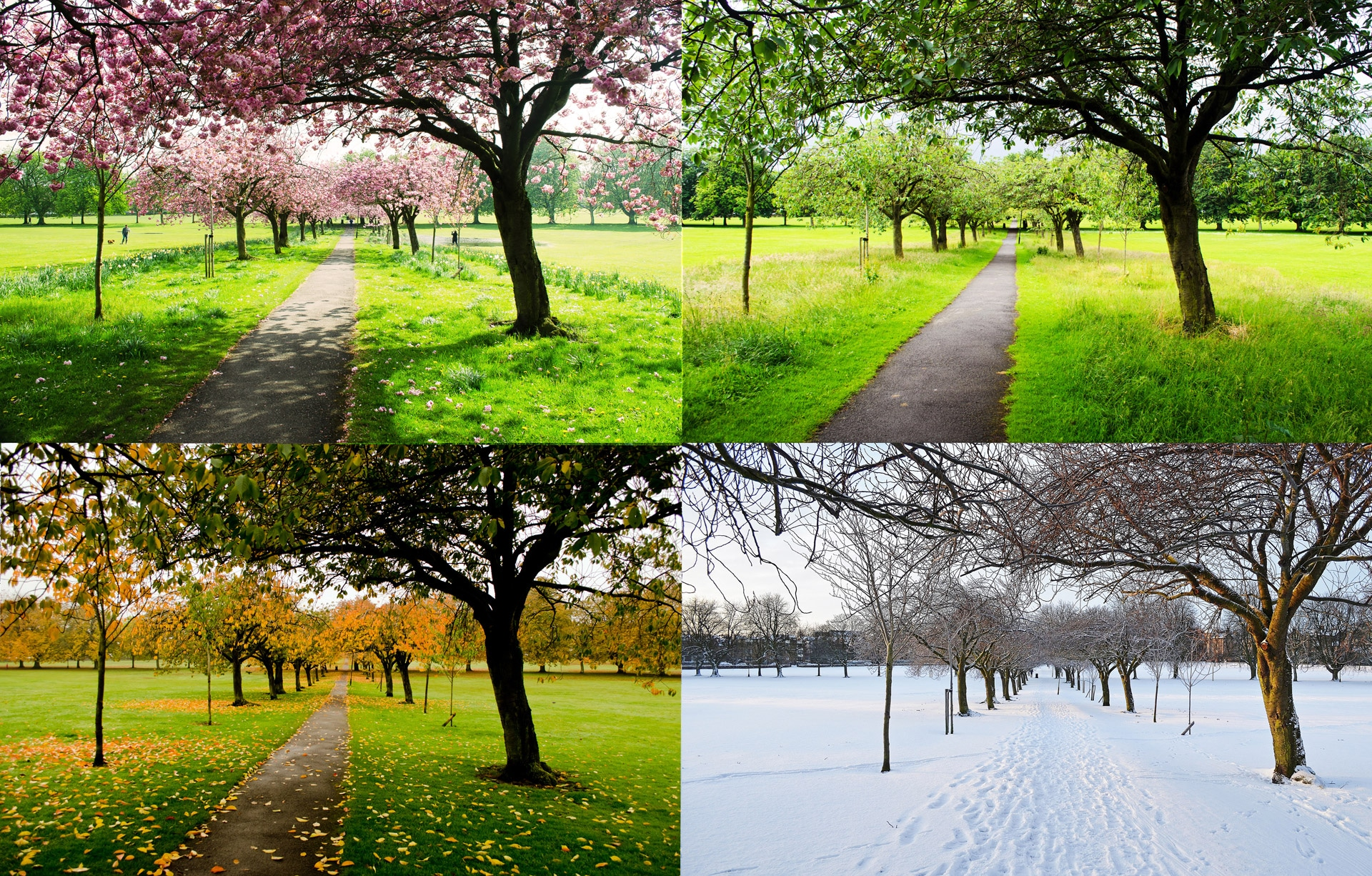 The Four Seasons Of Lawn Care Healthy Lawn All Year Long