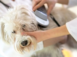 Micro-Chips: the most reliable prevention of homeless pets