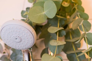 Steamy eucalyptus DIY • everythingelze.com