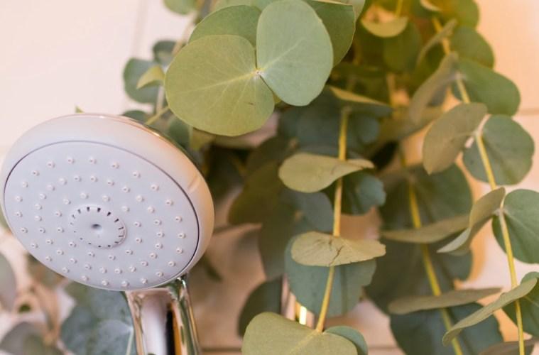 Steamy eucalyptus DIY • everythingelze.com