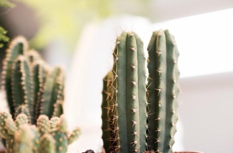 Cactuses! • everythingelze.com