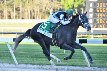 Tapwrit Tampa Bay Derby