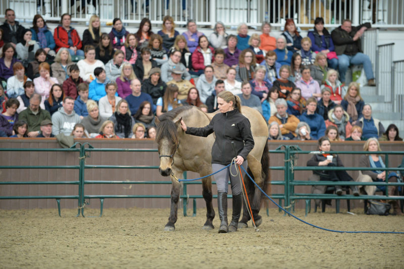 Parelli Demonstrations at Your Horse Live: Alison Jones and Yellow at play