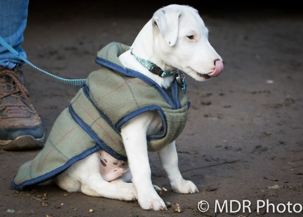 Nutz - Harriet's dog, image credit MDR Photo