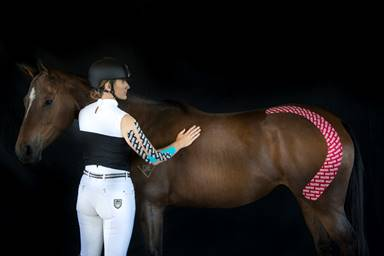 RockTape UK Launch Equine Movement Taping Course.