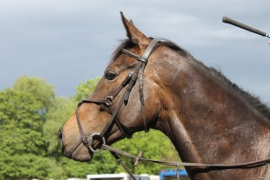 Equestrian terms